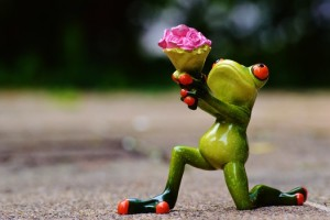 i-beg-your-pardon-excuse-me-frog-sweet-medium