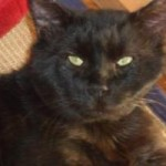 Mack is a sweet, snuggly black cat looking for a forever home!
