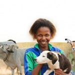 Veterinarians Without Borders is one of the five finalists in the Inspiration in Action contest.