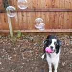Scout's last call for bubbles, Jan 6, 2012.