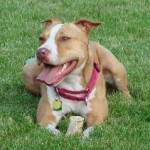 "Ohio removes ""pit bull"" from state's definition of dangerous dog"
