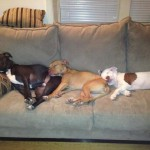 Photo (c) 2012 Sarah Anderson. From L to R: Mabel, Misha, Tessie