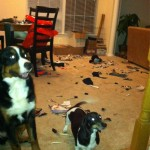 Karl Alzner's dogs weren't happy about the Washington Capital's loss. They were just happy to show off their handiwork!