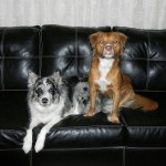 Bandit and Bailey, in a rare moment of calm, sit for a photo. A great deal of chicken was required for this.