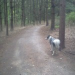 Bandit and I on a walk in Corbett's Glen in Brighton, NY.