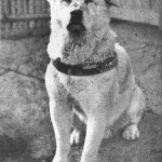 Hachiko is just one of many stories of faithful dogs who mourned the deaths of their owners.