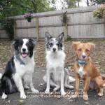 Scout, Bandit and Bailey - can you tell by looking at them which is the introvert and which is the extrovert? Can a dog even be an introvert or extrovert?