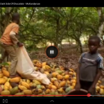 "The first step in making cocoa is to harvest the cocoa pods, open them up and remove the beans. This is how it happens. (Screenshot from ""The Dark Side of Chocolate"")"