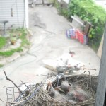 The view from the robin's nest. Darling husband working on a project, Bandit barking at the gate.