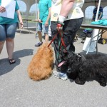 Rochester Institute of Technology's 3rd Annual Dog Walk