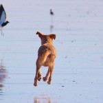 My dog eats a live bird (musings on animals doing what animals do)