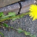 flower in cracks