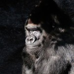 The Small World of a #TrendingTopic: Gorillas and Other Big Things