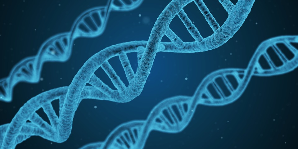 https://pixabay.com/en/dna-string-biology-3d-1811955/