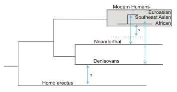 Interbreeding 2