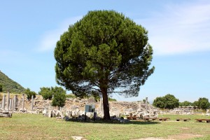 tree and ruins - Ephesus 2012