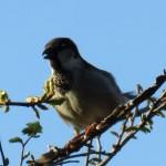 bird in tree 03.28.15 2