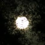 full moon 10.27.15 05