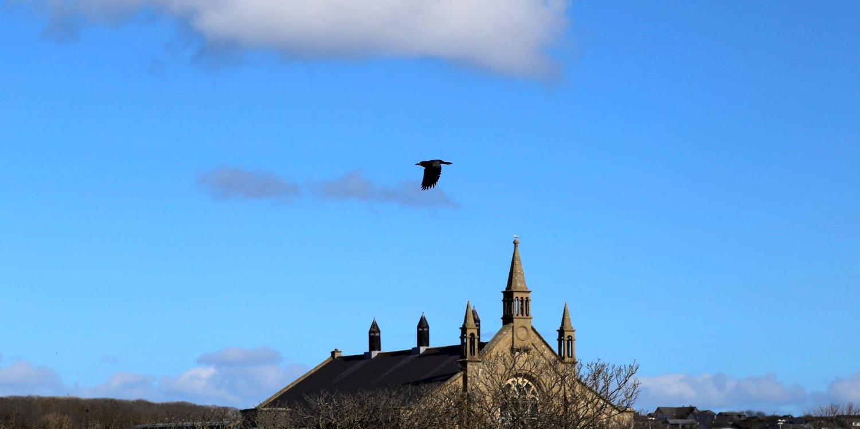 08 281 Kirkwall ravens