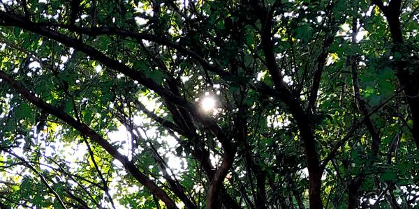 Mystical Experiences Through Deep Practice