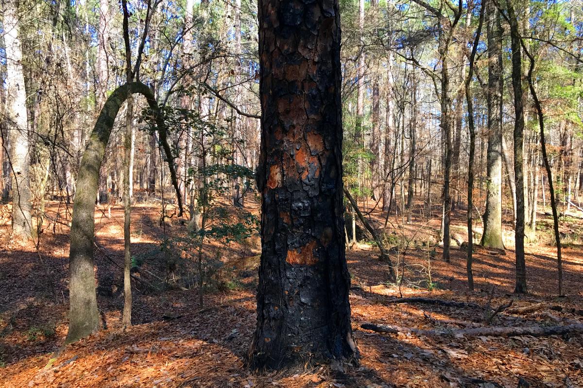 forest pilgrimage 01