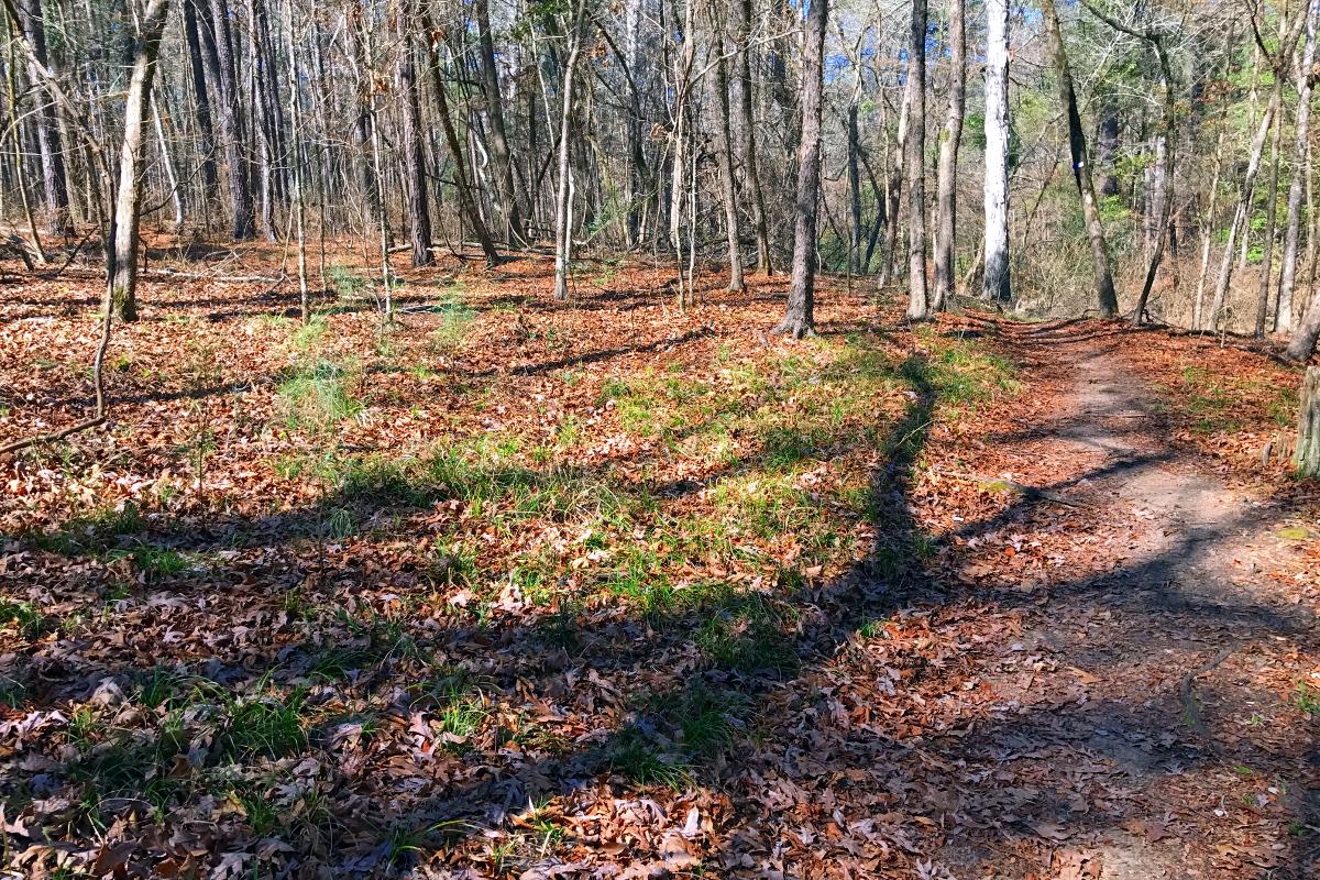 forest pilgrimage 02