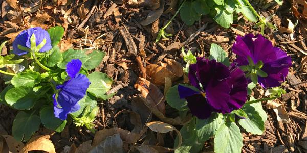 Denton flowers