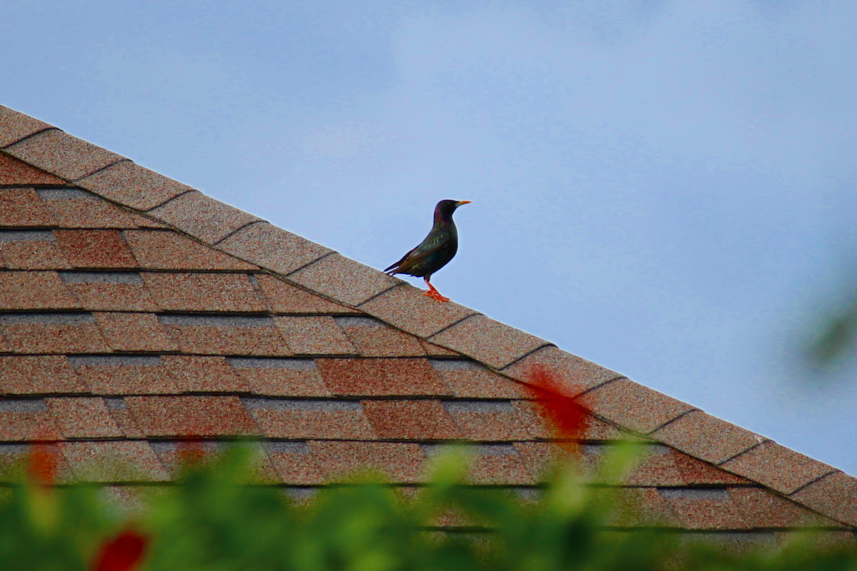 bird on roof 05.12.12