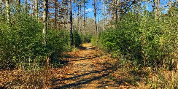 forest pilgrimage 05