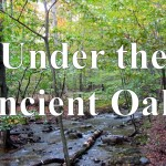 Under the Ancient Oaks – The Video Series