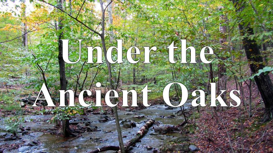 Under the Ancient Oaks - The Video Series