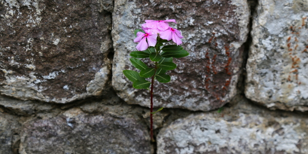 flower in rock 600x300
