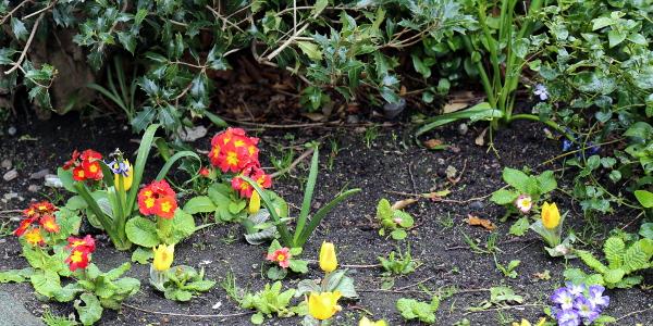flowers in dublin 04.16.16