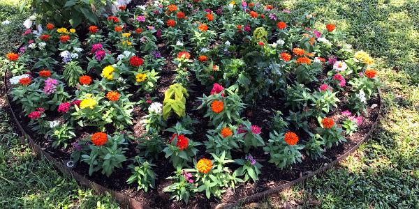 flowers 06.25.17