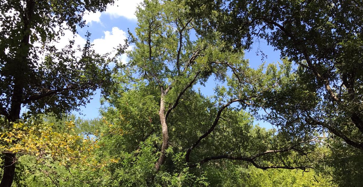 trees 07.30.17 01