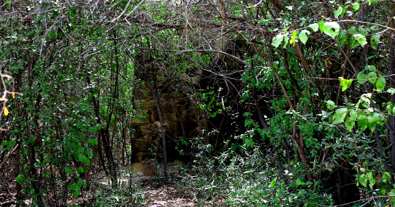 ruins in jungle Curacao 2017 782x411