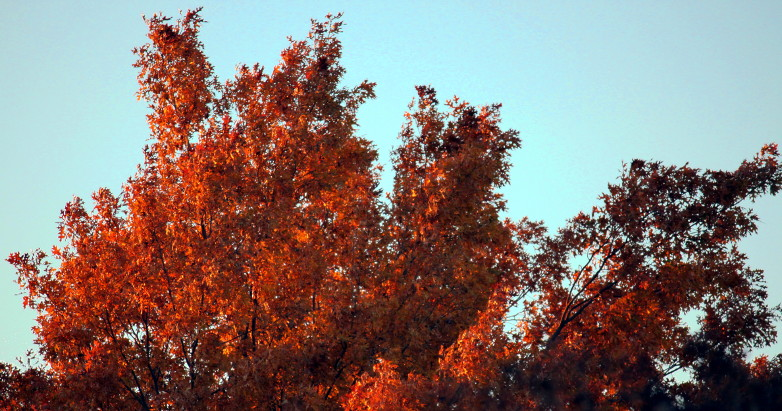 fall colors 11.25.14