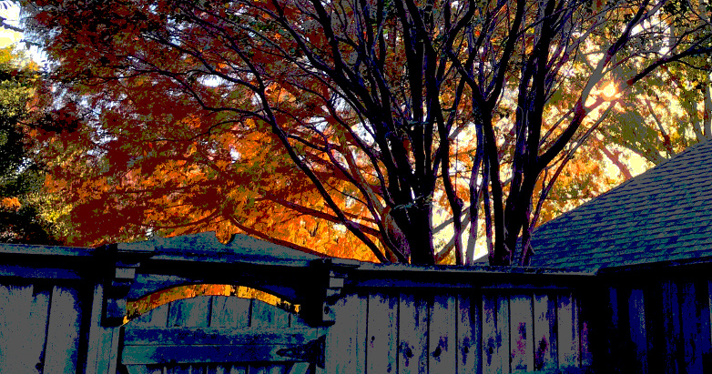 sun and fence posterized 11.22.17