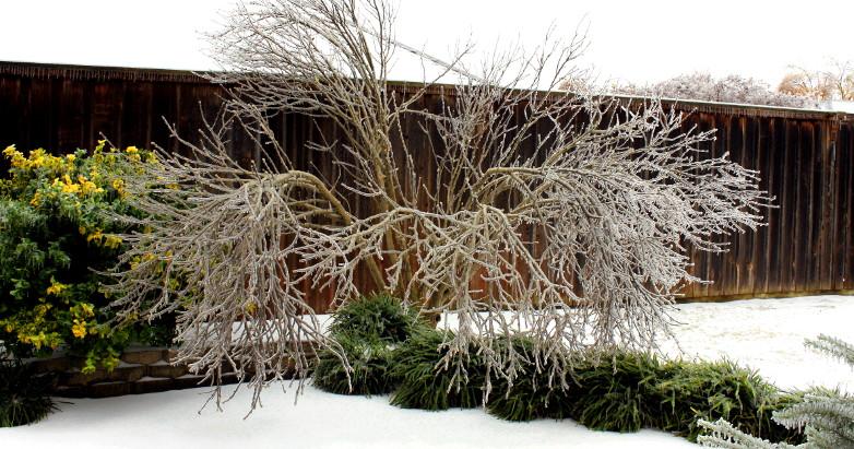 ice storm Dec2013 13
