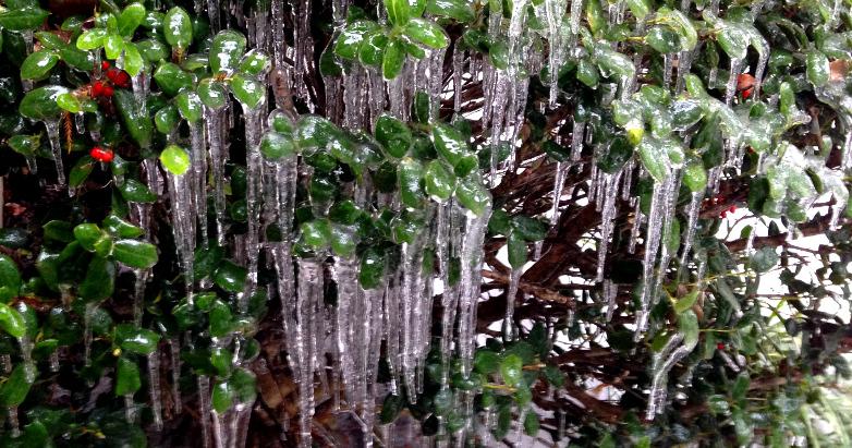 ice storm Dec2013 14