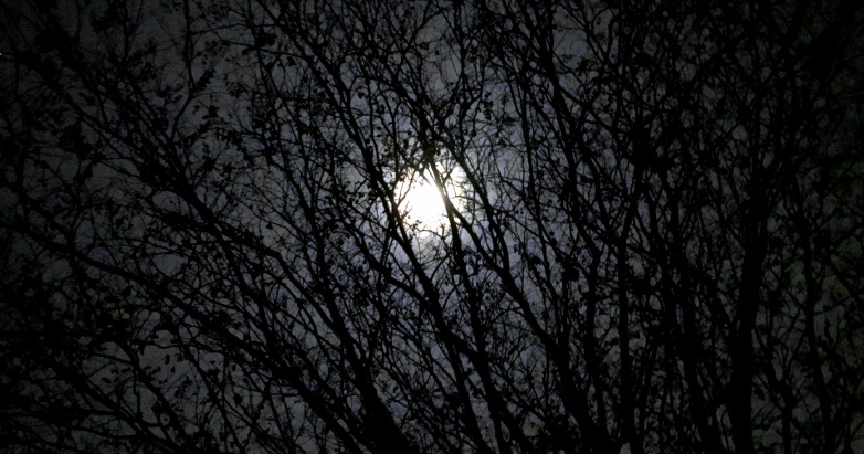 moon in trees 12.12.16