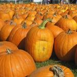 Deacon Farmer Serves Up Pumpkins, Pies and Prayer