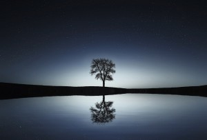 Tree with reflection and starry sky. Tonglen is about creating balance.