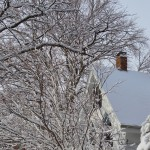 Snow on trees and a roof