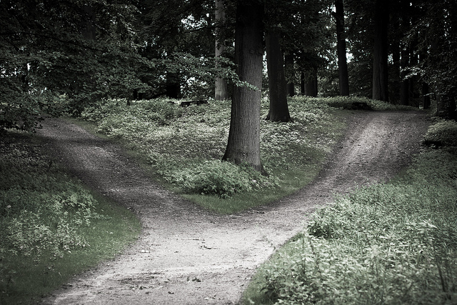 A dirt path through a field forks left and right, with trees down the middle