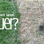 Doing the California Drought: Is a Brown Lawn Holier?