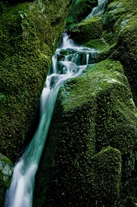 waterfall on moss