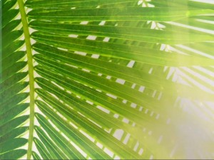 The Adventurous Lectionary: Palm Sunday – April 13, 2014