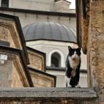 On Animal Companions