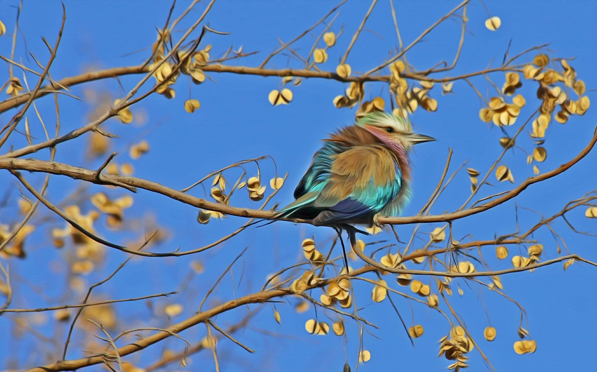 bird-515031_1920